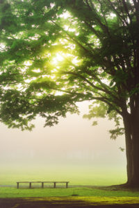 木とベンチの写真
