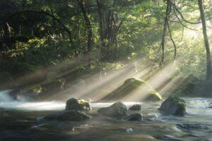 光芒の写真1